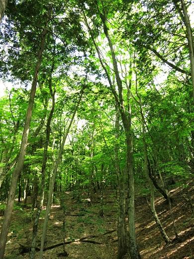 登山道新緑