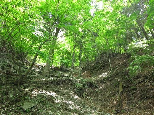 蛭ヶ岳南稜尾入口