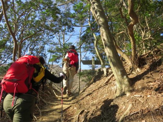 梅ノ木尾根を登ると大山から大山三峰への縦走路と合流