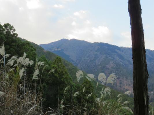 雷ノ峰尾根から大山山頂の遠望