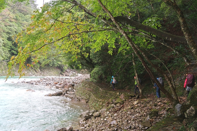大杉谷のルート河原付近を歩くコース