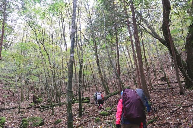 日出ヶ岳へのルートも樹林帯の急登