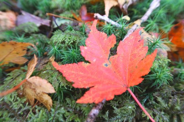 大台ヶ原の秋