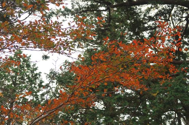 大台ヶ原登山紅葉が綺麗