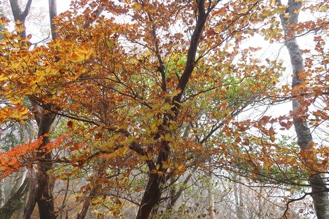 大台ヶ原周辺の紅葉色付き