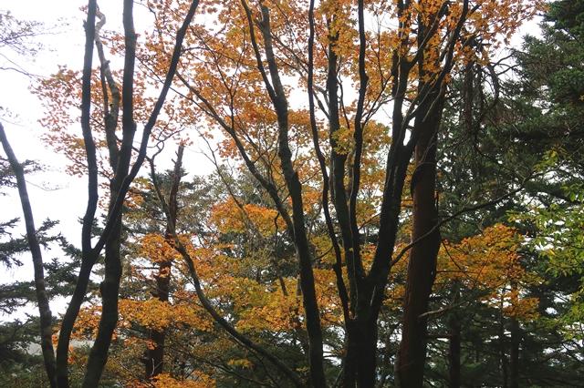 大台ヶ原の山頂周辺の紅葉