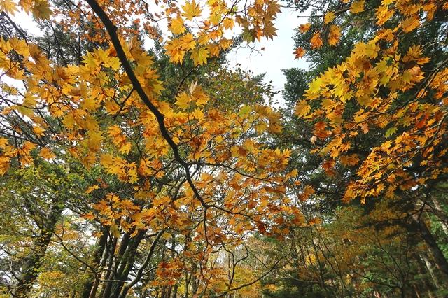 11月上旬大台ヶ原の紅葉は旬