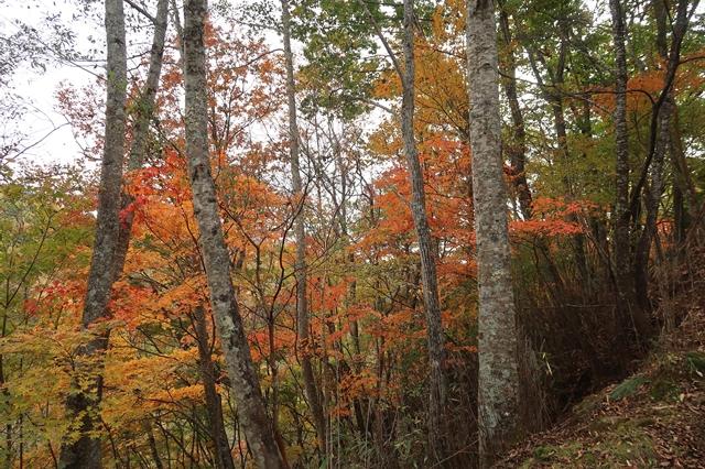 作場平周辺の紅葉