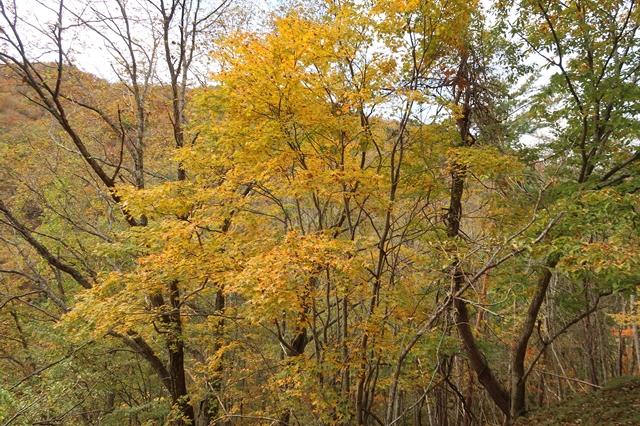 多摩川源流の水干・小さな分水嶺周辺の紅葉