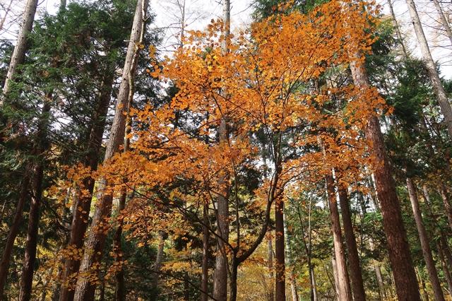 多摩川源流域の森