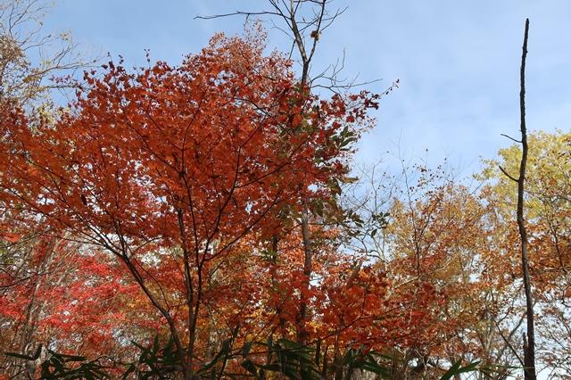 笠取小屋までのルート紅葉