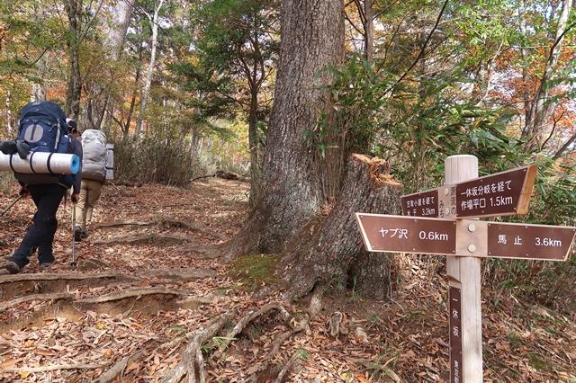 馬止経由からも笠取小屋や、水干、小さな分水嶺へアクセス