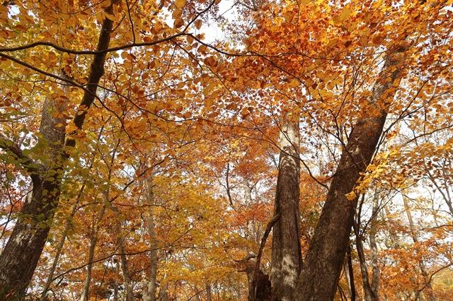 奥秩父笠取山周辺の紅葉