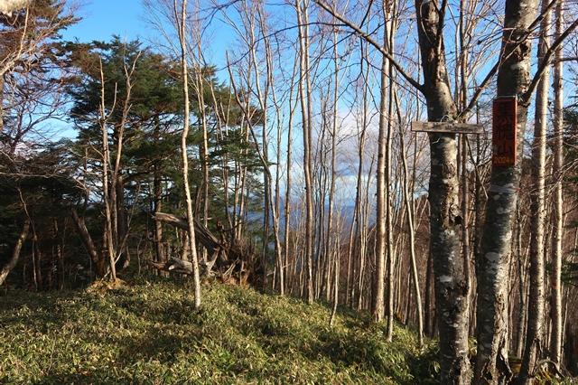 黒槐山の山頂樹林帯