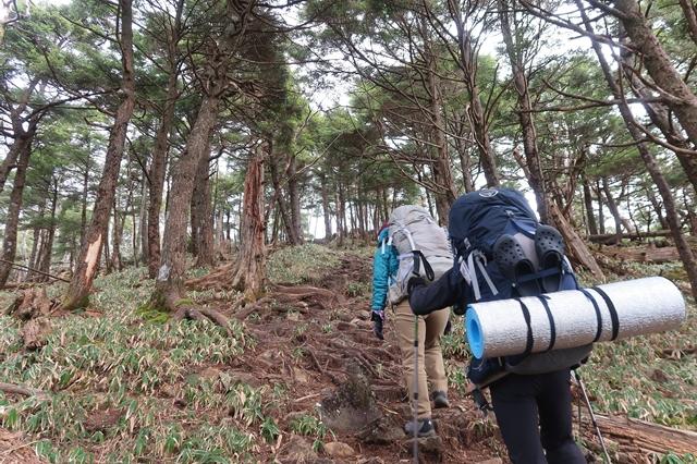 唐松尾山の山頂直下