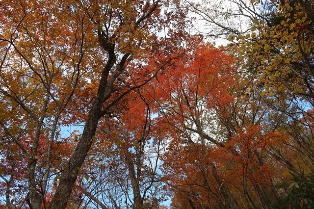 奥秩父の短い秋景色