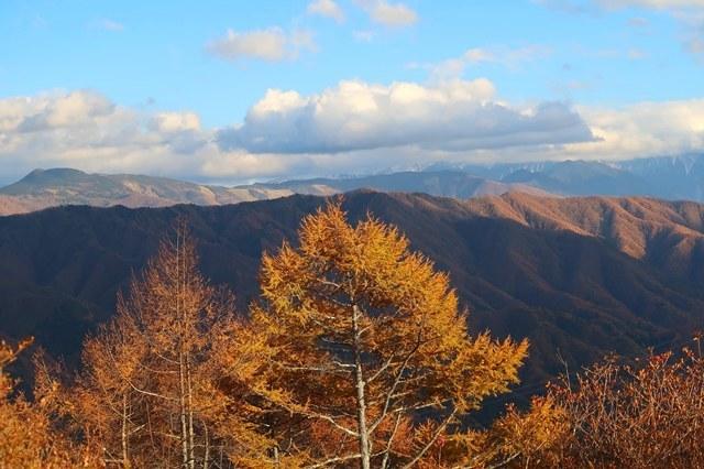 山頂周辺の落葉松