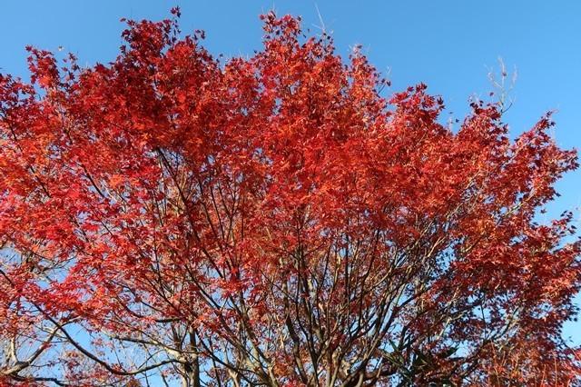 紅葉に染まる宮ヶ瀬