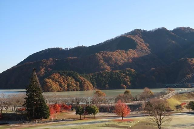 宮ヶ瀬湖のランドマークツリーもみの木