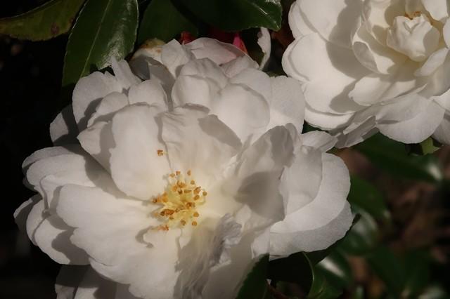 純白なお花