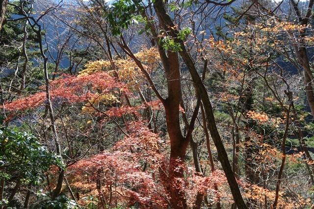 栂立ノ頭周辺紅葉