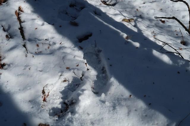 栂立尾根の新雪