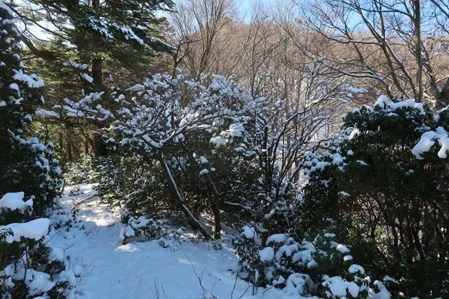 本間ノ頭へ進んでいくと雪が多く