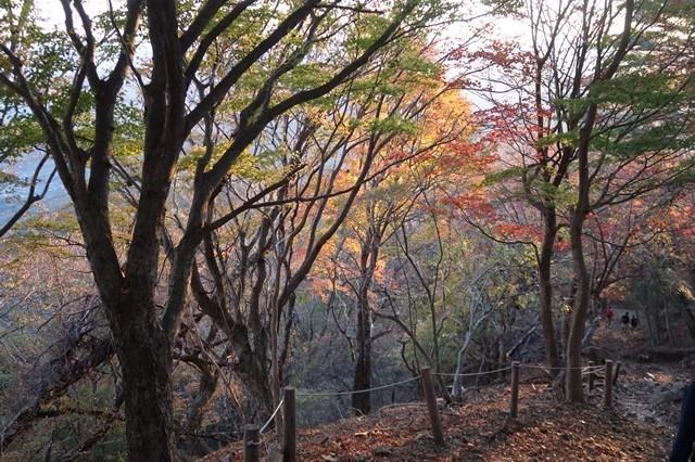 大倉尾根の紅葉
