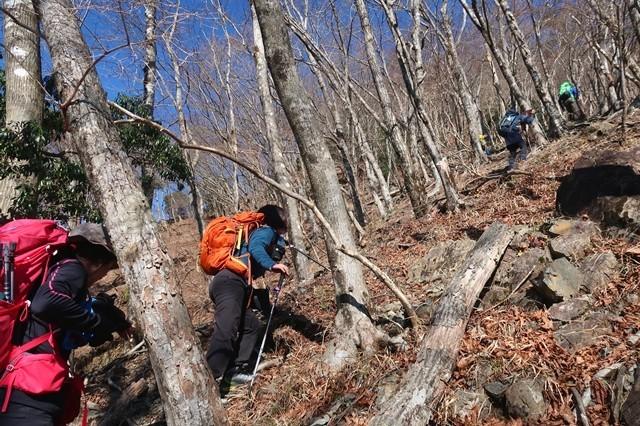 マルガヤ尾根急登が鍋割山稜まで続きます