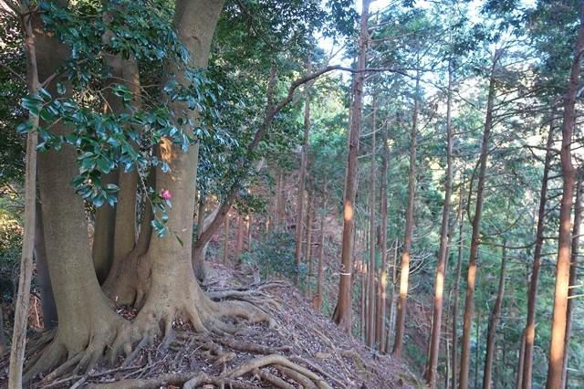 梅ノ木尾根木の根っこゾーン痩せ尾根箇所