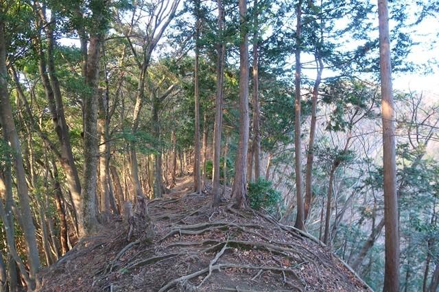 P537登山道