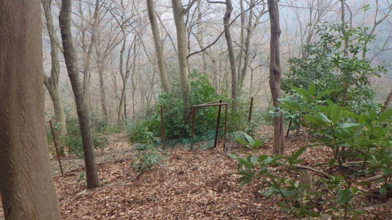 宝尾根を目指して更に下ると鹿柵のゲート