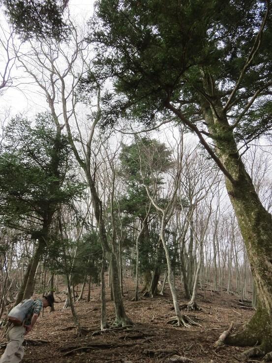 宝尾根も自然が豊富木々の様子