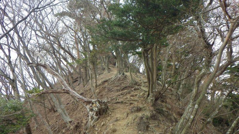 中弁天、下弁天へのルート樹林帯