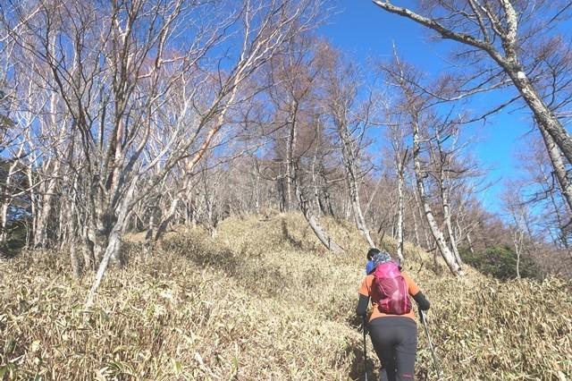 三条ダルミから雲取山へのルート