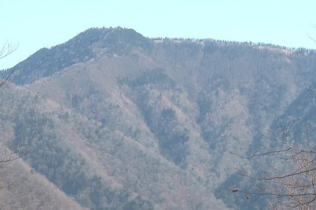 サオラ峠付近から雲取山