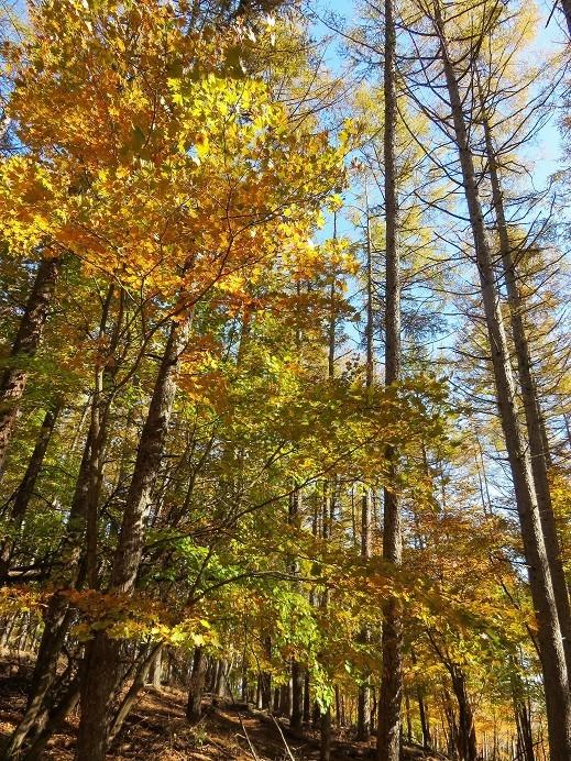 丹波天平は新緑・紅葉の時期に歩くのがベスト