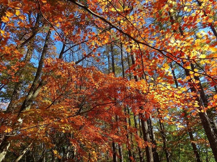 丹波天平の木々紅葉の写真