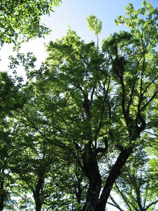 檜洞丸登山道の新緑の美しさ