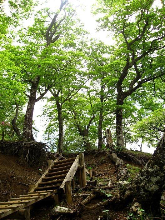 ツツジ新道の登山口周辺の新緑・ツツジ