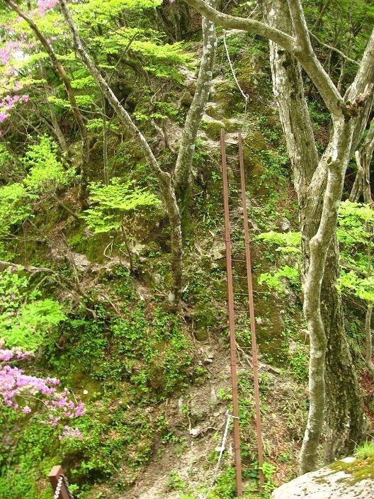 大石山登山道の梯子