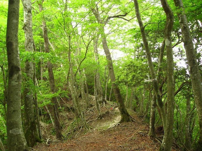 雨山峠から鍋割山方面登山道の新緑