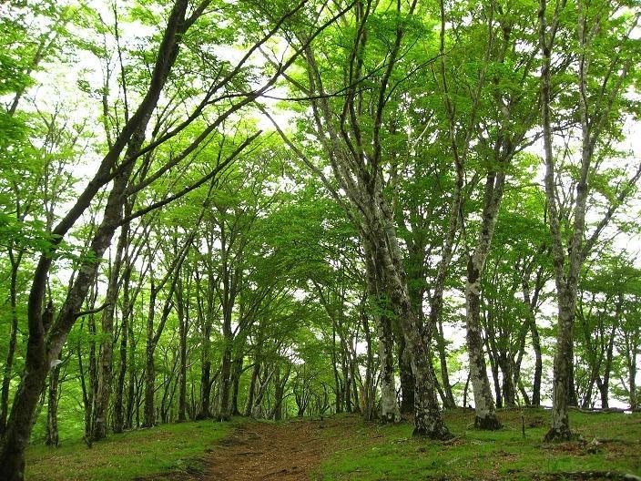 鍋割山~塔ノ岳への登山道雰囲気