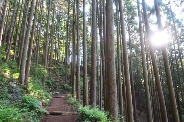 大倉高原山の家は標高約600mに位置している山小屋キャンプ場