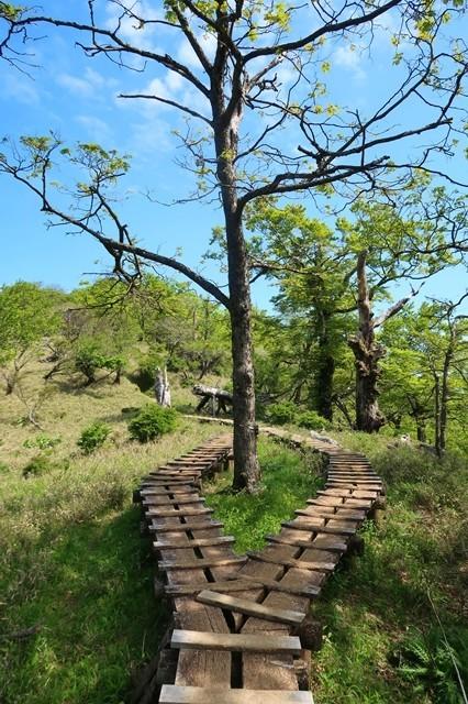蛭ヶ岳への登山道分岐している木道