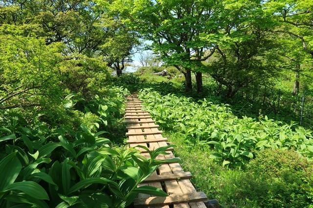 蛭ヶ岳山荘のグリーンロード
