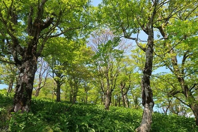 丹沢蛭ヶ岳周辺