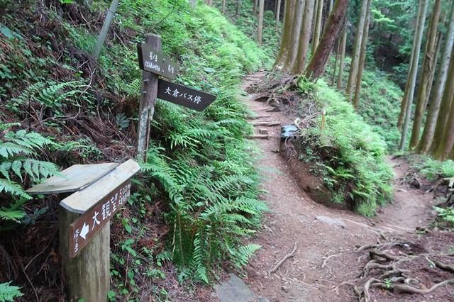 大倉高原山の家キャンプ場の分岐