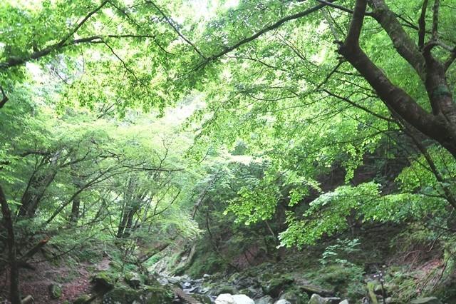 本棚の滝までのルート新緑