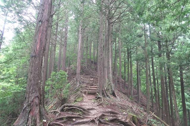 畦ヶ丸への登山道急坂が連続